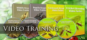 Feeder Insect Video Training