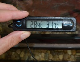 Thermometers for My Reptile Enclosure 2