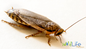 Advanced Cockroach Breeding Methods